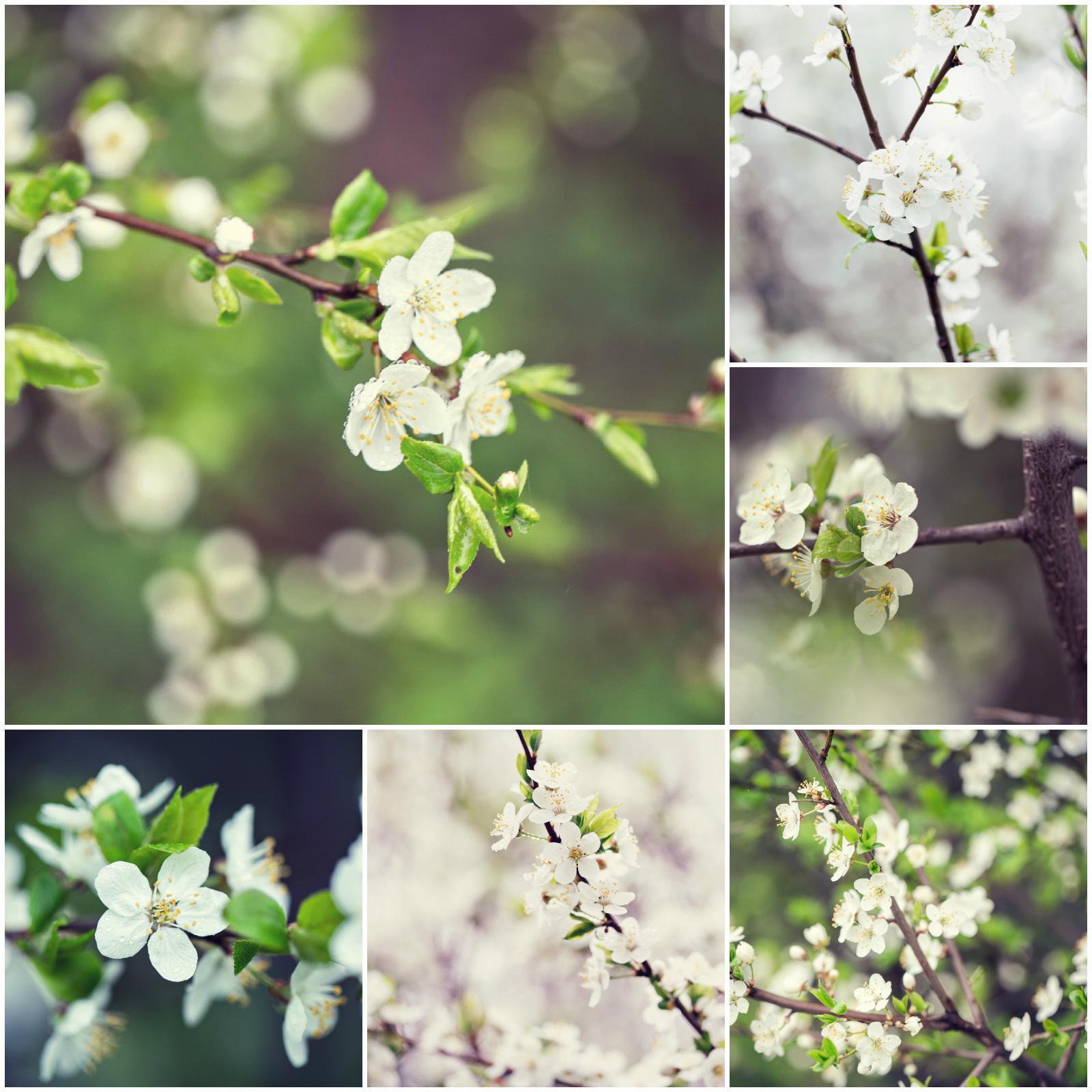 wiosenne kwitnienie